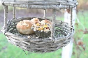 Forkæl fuglene i den kolde vintertid - Lav selv fuglemad