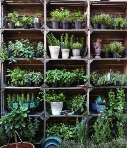 planter til terrassen