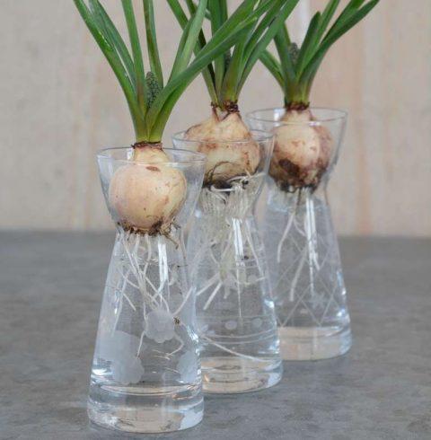 Perlehyacintglas med slibninger