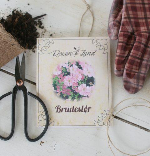 Blomsterfrø - Brudeslør