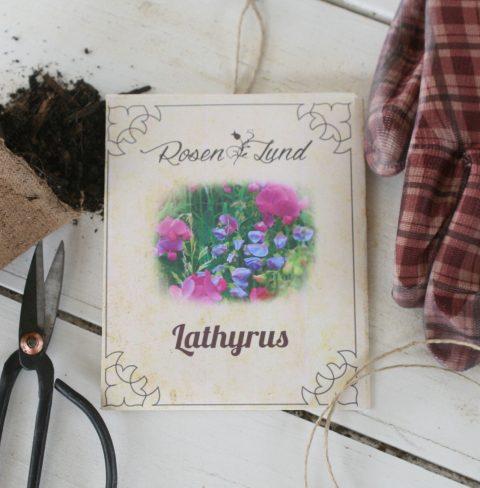 Blomsterfrø - Lathyrus (ærteblomst)