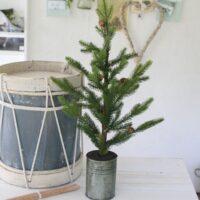 Grantræ med kogler i zinkpotte - medium