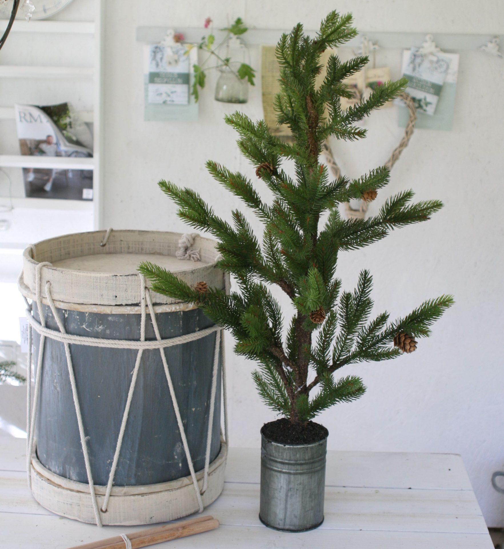 Grantræ med kogler i zinkpotte - large