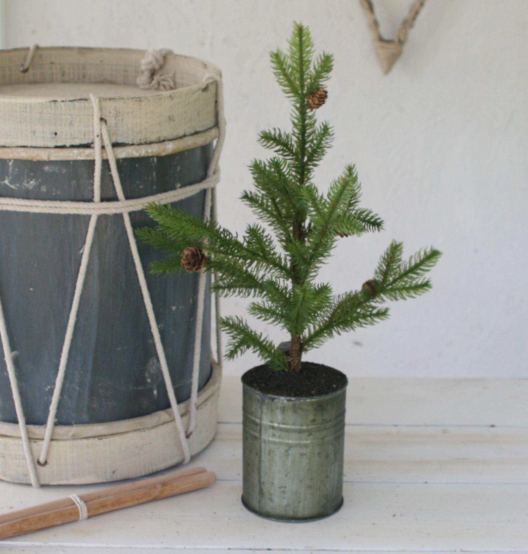 Grantræ med kogler i zinkpotte - small