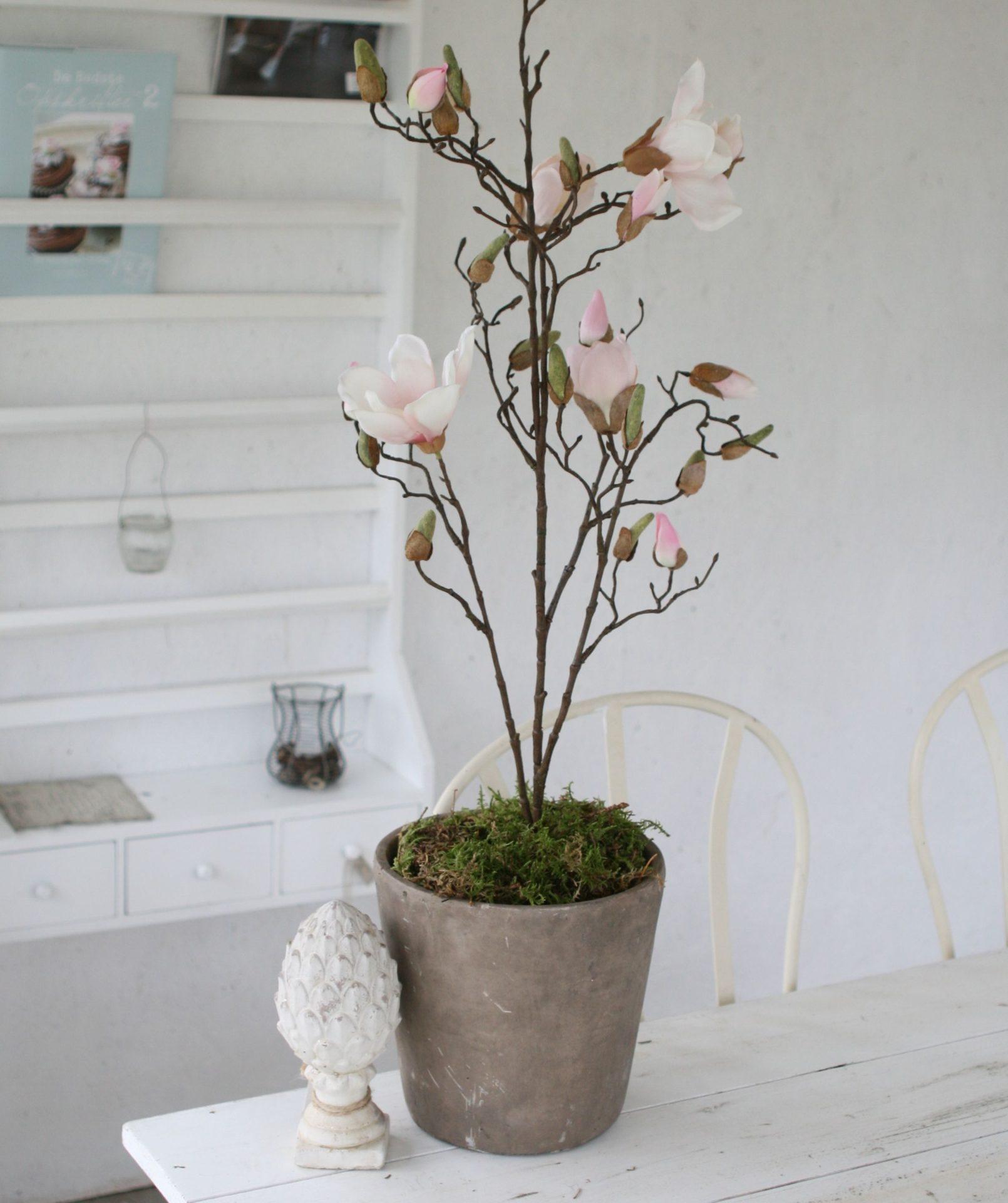 Magnolie gren