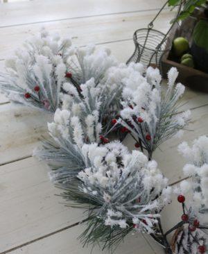 Fyr gren med sne og kogler