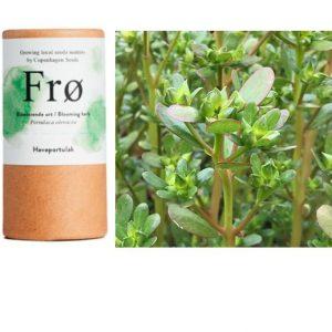 Haveportulak - super sund plante