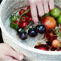 Tomat - Black cherry