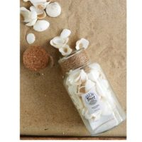 Strandskaller - Sandy Shores Shells white