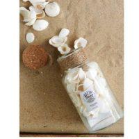 Strandskaller - Sandy Shores Shells white