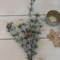 Lærkegren - Larix Branch
