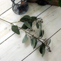Eucalyptus - 60 cm, grøn